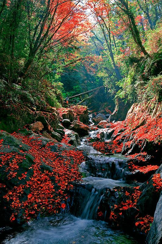 高清秋天风景横屏图片